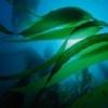 Натуральная косметика на основе водорослей GUAM